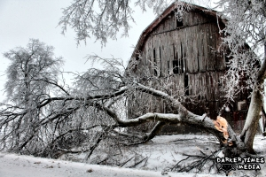 Snapped Tree along Henderson Rd. in Shiawassee County